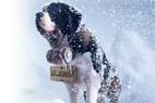 Wyścigi psich zaprzęgów w regionie Oravska Lesna