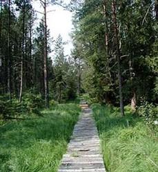 Waldsteig (24 km)