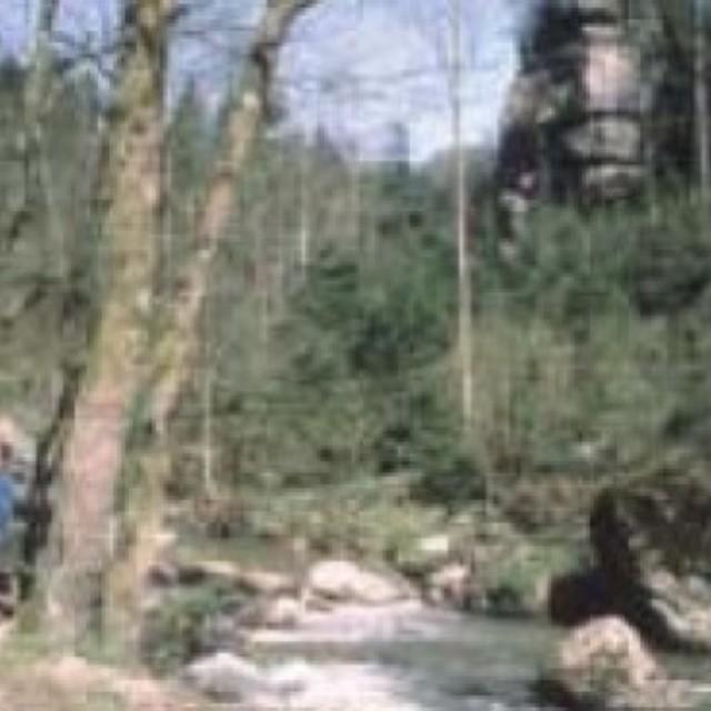 NSG Pesenbachtal
