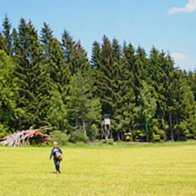 Waldlehrpfad in Windhaag
