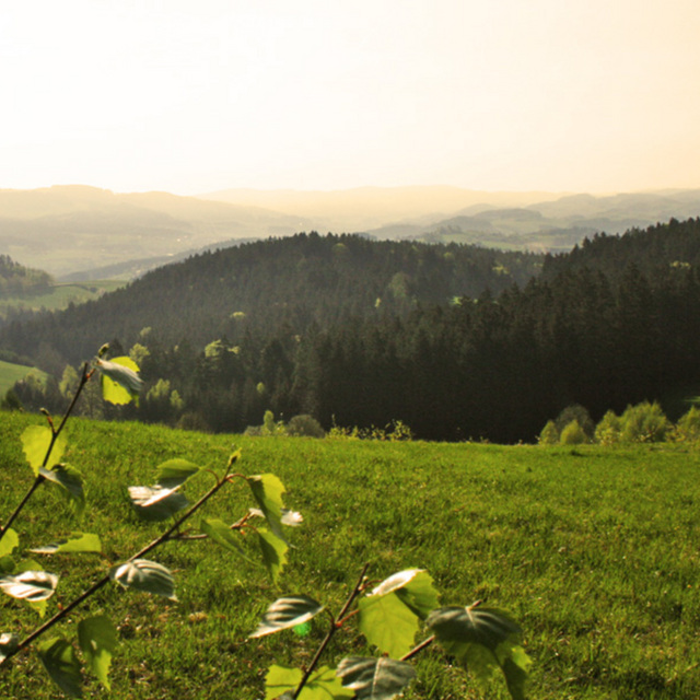 Kirsteig (7,2 km)