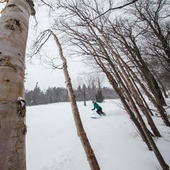 Meredith Mcfarland navigates the birch trees at Sugarbush.