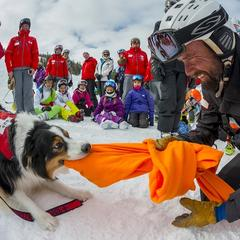 Aspen Snowmass ski patrol vs. avalanche dog - ©Aspen Snowmass