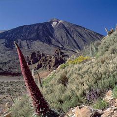 Im Teide-Nationalpark auf Teneriffa - ©Promotur Turismo Canarias, S.A.
