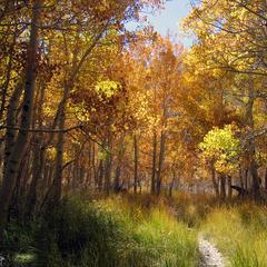 Fall Path - Mammoth - Jim Kellett