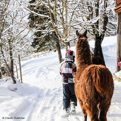 """""""Papa, ich mag heute nicht Skifahren!"""" Die besten Alternativen in der Region Wilder Kaiser - ©Claudia Böttcher"""