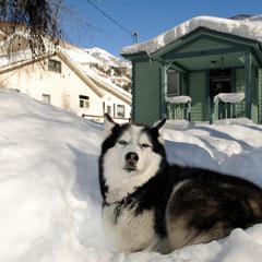 Husky in Telluride - ©Norbert Eisele-Hein