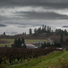 A typical bucolic scene in the greater Mt Hood region