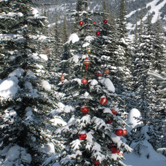 Families decorate trees at Sun Peaks. Photo by Becky Lomax.