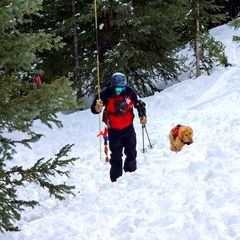 Rio, the avalanche dog at A-Basin