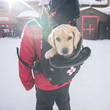 Paw Patrol: Ski Dogs on Duty - © Keystone Resort