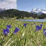 Alpenwelt Karwendel - ©Alpenwelt Karwendel, Rudolph Pohmann