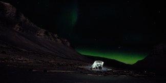 Toppturer på Svalbard - ©Vigdis Skogly