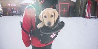 Paw Patrol: Ski Dogs on Duty ©Keystone Resort