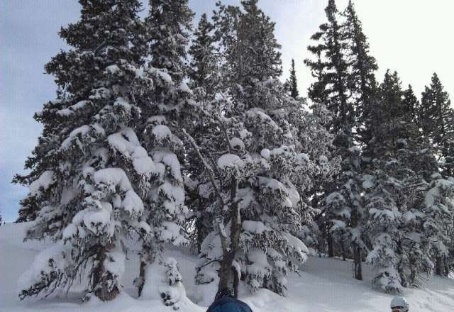 plenty of pow to find.  ride the trees
