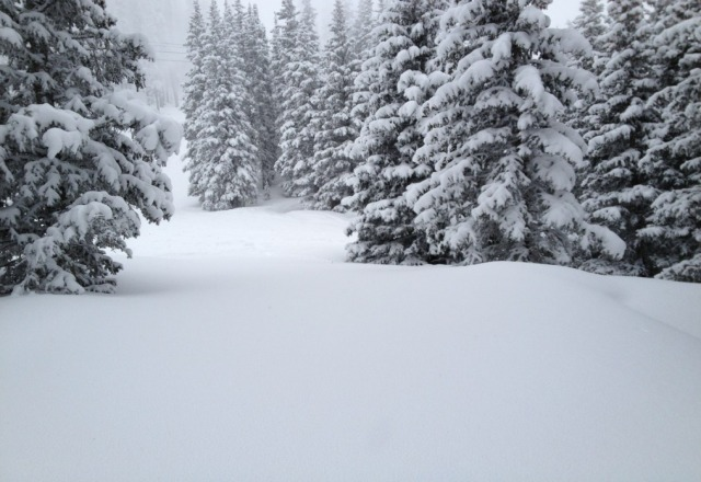 Powder in the tress. It was a great day!