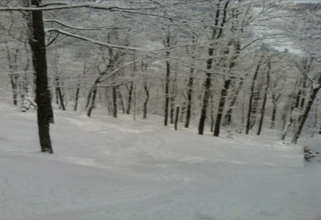 Glades are in full play. Nice fresh powder up top. Fresh tracks almost every run. Mashed potatoes toward the end of the day.