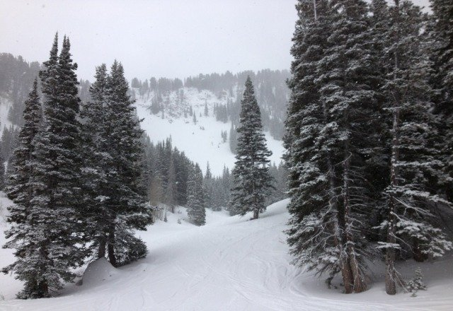 Great conditions today! Plenty of fresh pow on the glades.