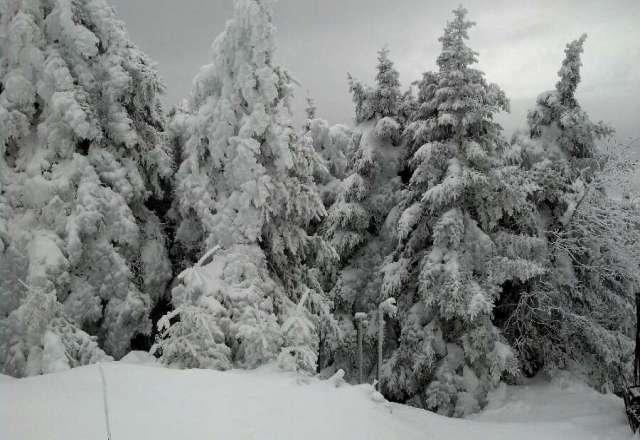 deep snow, great flakes, epic fun!