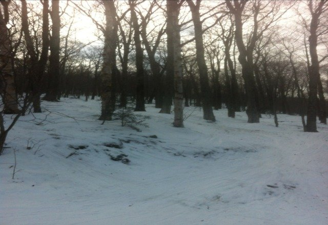 sweet skied woods all day
