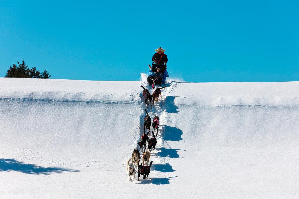 Balade en chiens de traineaux dans la neige fraiche des Rousses - © Station des Rousses / S. Godin