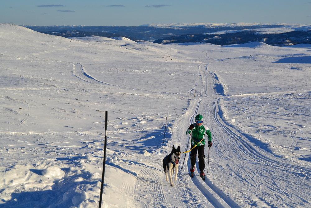 Skiglede i Bergsjøområdet - © Ål Utvikling AS