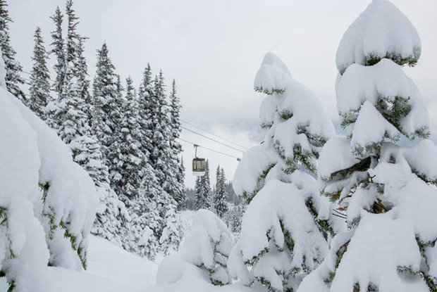 Erster Powder in Whistler in der Saison 13/14 - © Mitch Winton/coastphoto.com