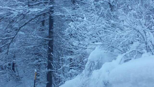 Neve farinosa in quota e nei fuoripista in mezzo al bosco.