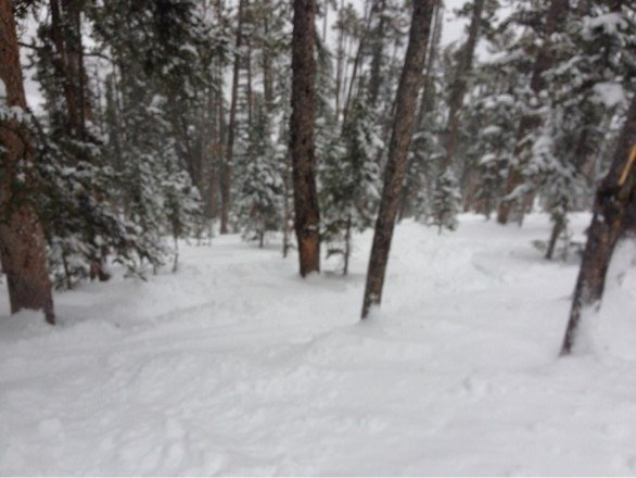 Great pow pow in the trees. Gnar gnar
