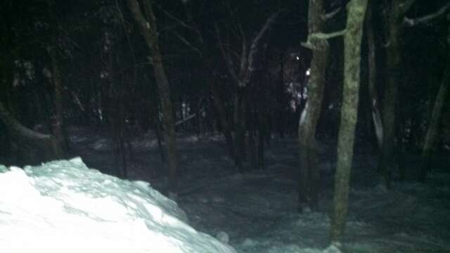 the woods are good, lots of untouched powder still around for midnight madness, snow is great