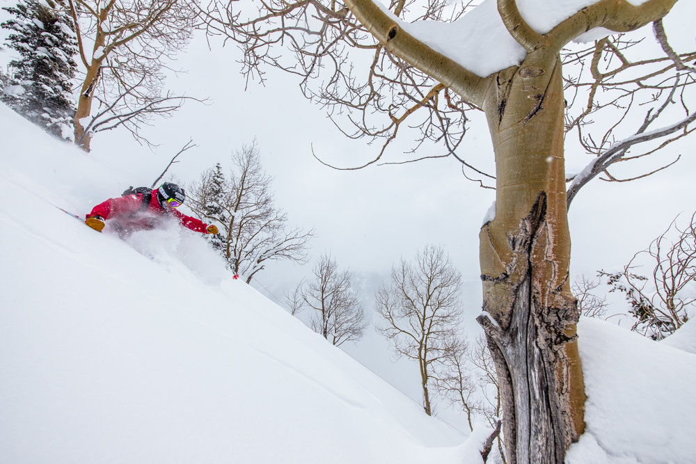 TJ David, deep snow and great patrollers conspired to make this an outstanding day. - ©Liam Doran
