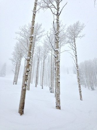 Great powder in the aspens, spring like conditions.