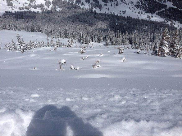 Untouched and thigh deep in spots!