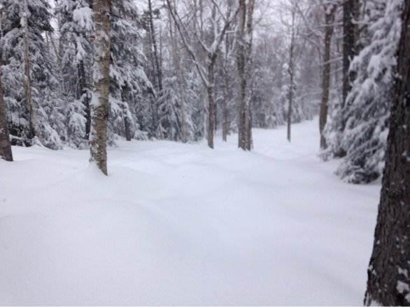 Holy powder, and no on here! Had first tracks in West Glade and a few others. If you love glades and you don't ride Bretton woods, your really missing out!