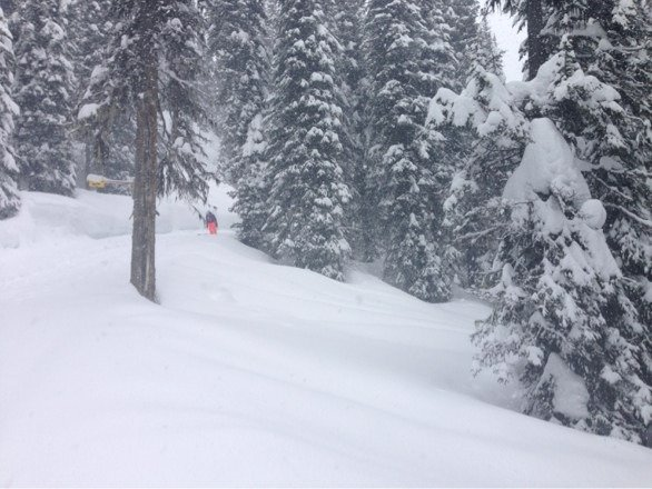 Best spring skiing! North Bowl, Ripper, Stoke lots of fresh tracks everywhere! Only 1 more week @ Revy...