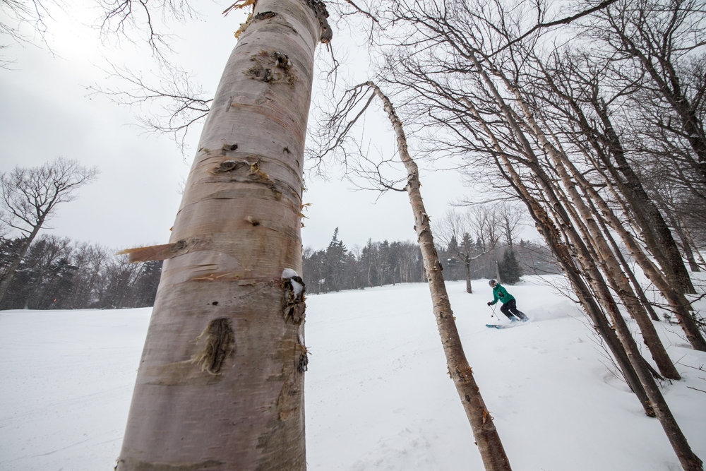 Meredith Mcfarland navigates the birch trees at Sugarbush. - © Liam Doran