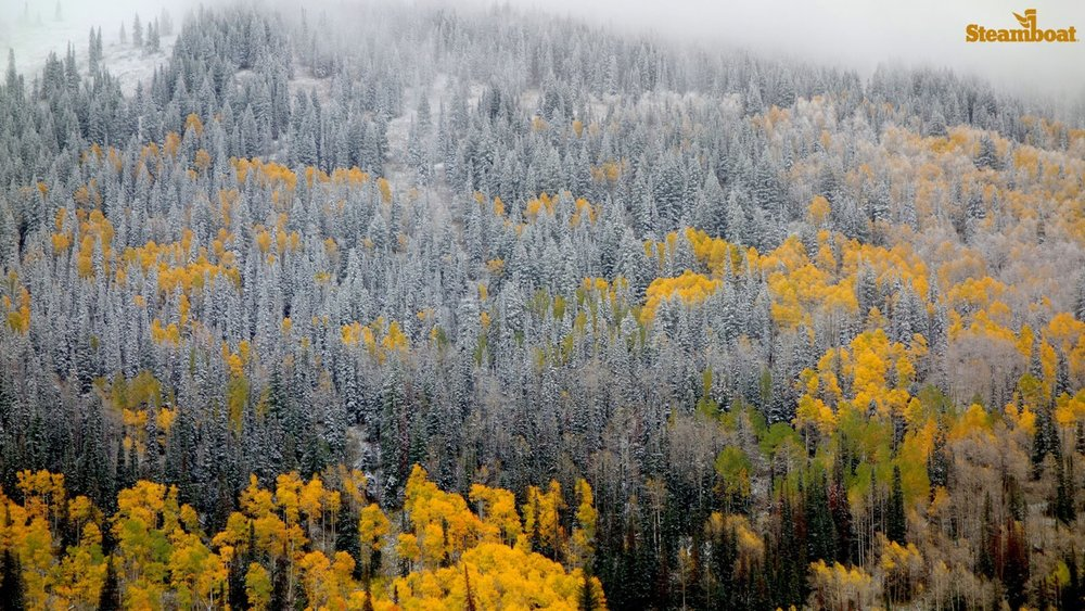 Steamboat's first storm prepping those glorious glades for skiing there soon. - ©Steamboat Ski Resort