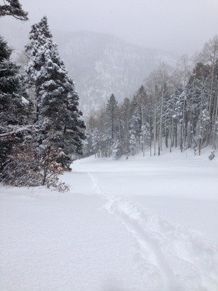 Knee deep powder on all the closed trails. They only had the magic carpet running.