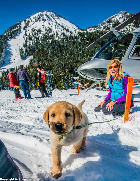 Crystal Mountain, Washington avalanche puppy in training. - ©Andrew Longstreth