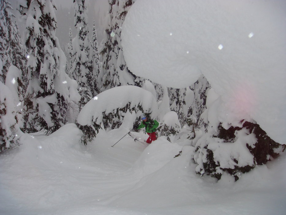 Powdery tree skiing at Whitewater.  - © Whitewater
