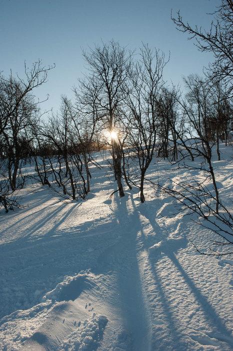 Mye pudder igjen i skogen - © Eirik Aspaas