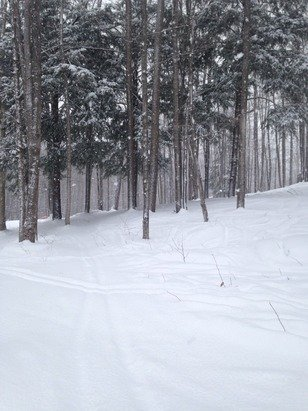 So much powder, great conditions!