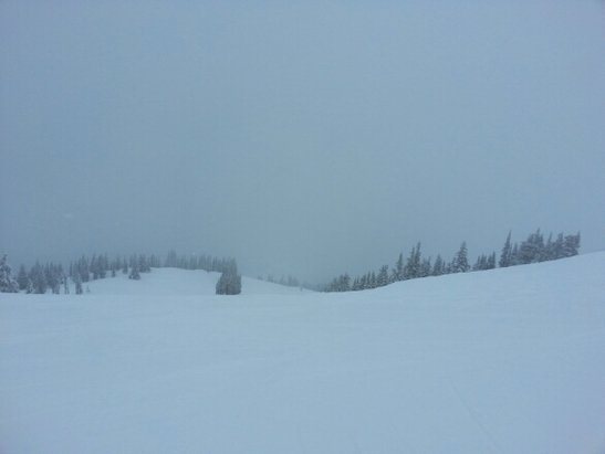 Revelstoke Mountain - great snow at the top today.   raining at the bottom.  - © discusser