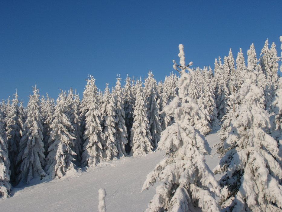 Braunlage Wurmberg - © Schneehase | Schneehase @ Skiinfo Lounge