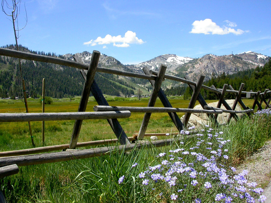 A meadow in Squaw Valley, CA.