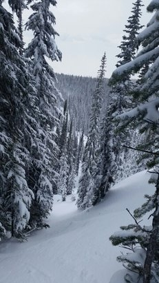 Revelstoke Mountain Resort - face shots for days!! 