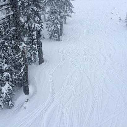 """Mt. Bachelor - 9"""" during the day, absolutely dumping nonstop but good visibility, light winds! Great quality snow too and of course everyone had gone back home after mlk - © dr fun"""