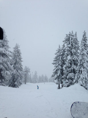 Cypress Mountain - Great snow this morning, super powder. But after lunch became packed powder snow. Also depend on where you are, some area can be hard pack (green). We then move onto blue it was all powder (less peeps). - © sheep