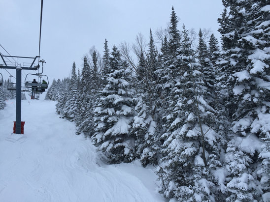 "Le Massif - Plenty of powder in the ""Off trail section"" glades are good ! Only few of them where patchy at the end of the day.