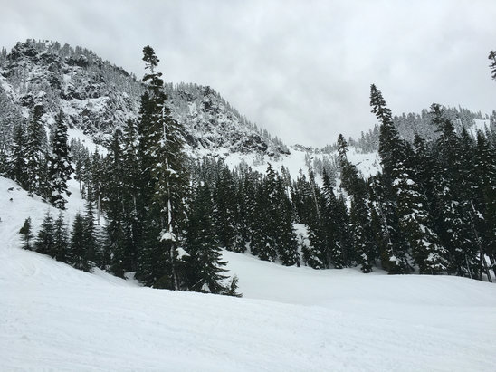 Alpental - New snow, thick, a little wet. Started raining Wed evening. Still fun, remember to scotch guard! - © wayneman
